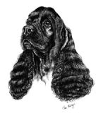 American Cocker Spaniel Personalised Greetings Card